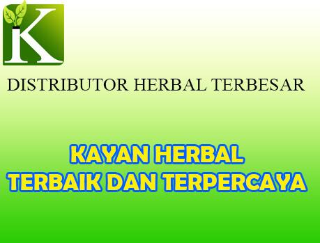 distributor obat herbal terbesar